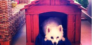Ξύλινο Σπιτάκι Σκύλου
